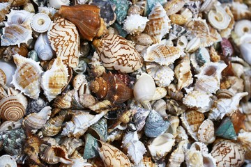 Seashell background or texture of different shapes and sizes.