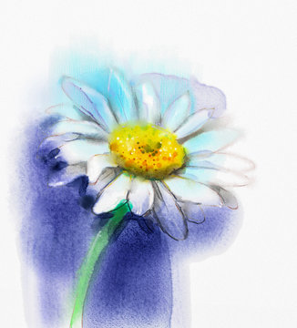 Abstract watercolor painting white gerbera, daisy flower on blue color background. Hand painted white floral water color. Sketch flower paint in pastel colors. Painted flower sketch