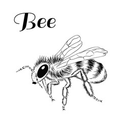 Without color picture of bee on white background.