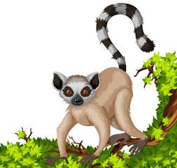 Lemur on the branch