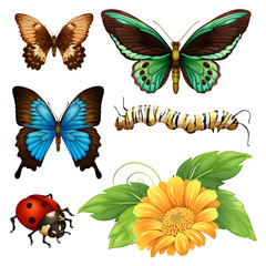 Different kind of butterflies and bugs
