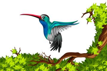 Humming bird flying on the branch