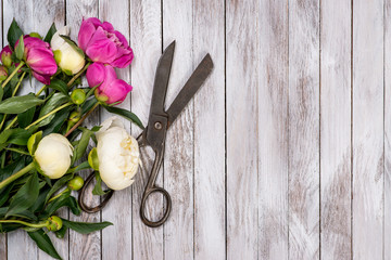 Bouquet of white and pink peonies flowers and vintage scissors on white painted wooden planks. Top view.