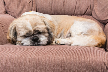 small dog is sleeping on retro armchair
