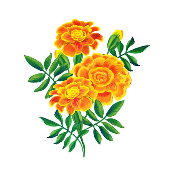 orange marigold bouquet raster illustration