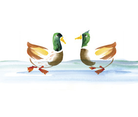 water duck watercolor hand drawn illustration