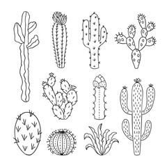 Cactus outline vector illustrations. Succulents plants doodle clipart