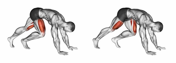 Mountain Climbers. Exercising for bodybuilding Target muscles are marked in red. 3D illustration
