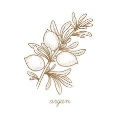 Vector image of medical plants. Argan.