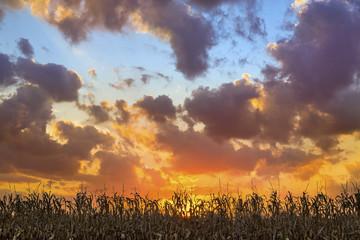 Glorious Harvest