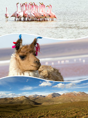 Wall Mural - Collage of Bolivia images - travel background (my photos)