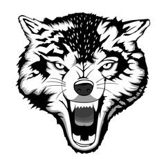 Enraged wolf