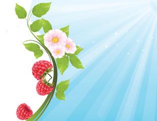 Raspberry flower swirl background
