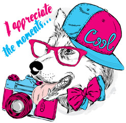 Dog with a camera. Vector  for a card or poster. Print on clothes. Husky wearing a cap and sunglasses.