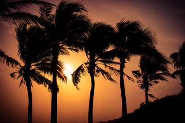 Silhouette coconut palm trees on beach at sunset. Vintage tone.