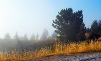 Misty landscape   in summer morning