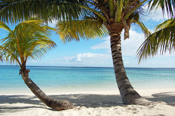 Two bent coconut palms on tropical beach