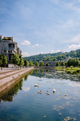 Famille de cygnes à Confluence à Lyon