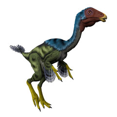 Caudipteryx on White - Caudipteryx was a peacock-sized oviraptor dinosaur that lived in China during the Cretaceous Period.