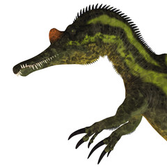 Ichthyovenator Dinosaur Head - Ichthyovenator was a theropod spinosaur dinosaur that lived in Laos, Asia in the Cretaceous Period.