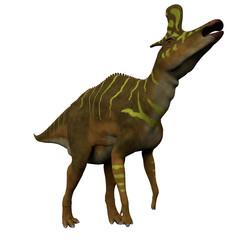 Lambeosaurus Dinosaur on White - Lambeosaurus was a Hadrosaur dinosaur that lived in North America during the Cretaceous Period.