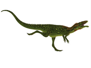 Masiakasaurus Side Profile - Masiakasaurus was a theropod dinosaur that lived in Madagascar during the Cretaceous period.