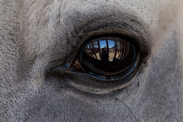 Reflection in a horse's eye