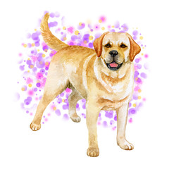 Watercolor closeup portrait of Golden Retriever breed dog isolated on pink abstract background. Large-sized longhair gun dog in Scotland. Hand drawn sweet home pet. Greeting card design. Clip art