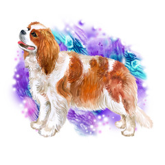 Watercolor closeup portrait of Cavalier king charles spaniel breed dog isolated on abstract colorful background. Toy dog from United Kingdom. Hand drawn sweet home pet. Greeting card design. Clip art