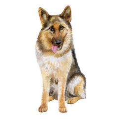 Watercolor closeup portrait of large German Shepherd breed dog isolated on white background. Large longhair working dog from Germany. Hand drawn sweet home pet. Greeting birthday card design. Clip art