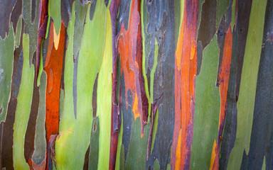 Maui Tree Bark