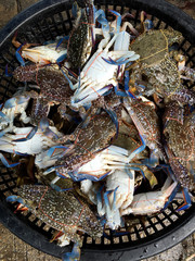alive blue crab  for sell in fish market