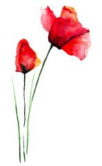 Original Poppies flower