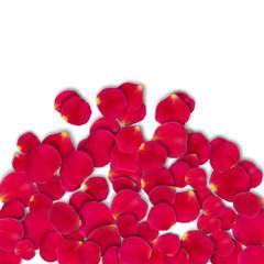 Vector bright roses petals