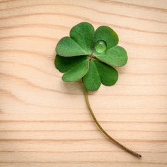 Clovers leaves on wooden background.The symbolic of Four Leaf Cl