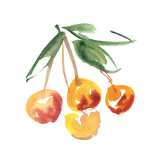 watercolor hand made cherry  fruit  illustration. paint drawn im