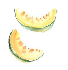 hand drawn illustration  of sweet melon fruit. watercolor drawin