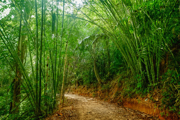 Walking trail in Thai tropical forest, Khao Sok National Park, Surat Thani Province, Thailand. Soft Focus.