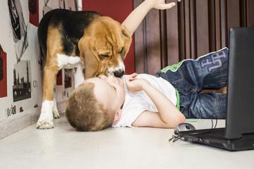 boy plays with a beagle dog
