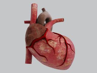 3D Human Heart - Anatomy of Human Heart