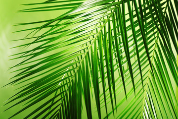 Green leaves of palm tree on color background Wall mural