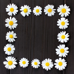 unfilled daisy frame/ flat lay frame of chamomile flowers on a dark wooden background