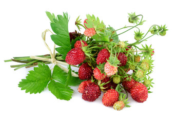 Wild strawberry. Woodland strawberry with leaves on white.