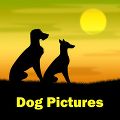 Dog Pictures Indicates Canines Evening And Outdoor