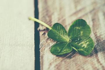 Green clover leaf on wooden background, close up
