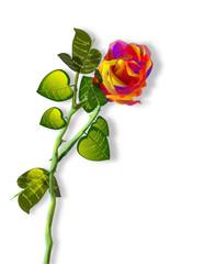 Rosa, illustrazione floreale.