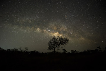The Milky way over trees in forest