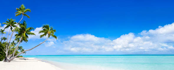 Photo sur Aluminium Plage Beach Panorama with blue water and palm trees