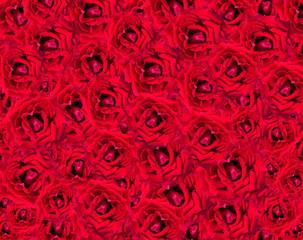 rose flower for background design