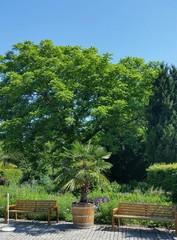 Sitzbänke im grünen Sommerpark mit Palme